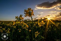 Contralluim (Jordi Rispau) Tags: contrallum landscape girona paisatges primavera