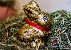 Not just for Easter (daveseargeant) Tags: easter lindt chocolate rabbit bunny gimp nikon df 50mm 18g medway rochester kent