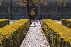 Gelber Radler (franksimonphotography) Tags: munich streetphotography summicronr yellow bike