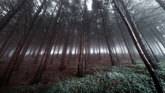 Misty forest (someoneshooting) Tags: landscape nature mountain hiking photographer photography hike natural forest wallpaper mountains fog foggy mist misty green blue cold winter spring