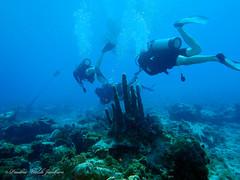 usvi 19 P3202115a sm (Pauline Walsh Jacobson) Tags: tropical marine sea life water atlantic ocean scuba diving dive seacreature coral reef underwater animal usvirginislands virginislands stthomas stjohn usvi vi caribbean pauline walsh jacobson