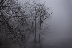The Trees in the Fog (jessicalowell20) Tags: kennebecriver richmond fog maine moody newengland northamerica river spring travel trees water weather