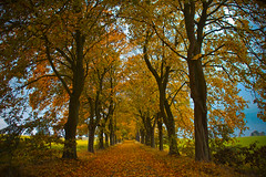 Herbstallee (NPPhotographie) Tags: nature art creative oberberg npp tree wood forest allee autumn fall street way