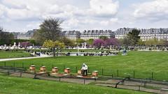 Bzz bzz Paris (Tchitcho's) Tags: garden paris bee abeille tuileries