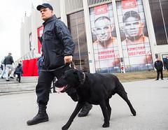 MMA. UFC (Sport24.ru) Tags: спорт sport мма плакаты собака пёс пес полиция алексейолейник алистароверим