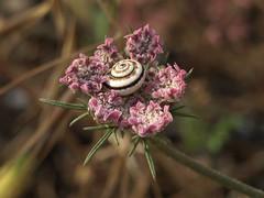 Snail (unicorn7unicorn) Tags: цветок улитка macromondays eyeofthebeholder spotlight