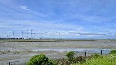 Bay Trail - San Mateo and Foster City (didimouman) Tags: san francisco bay trail