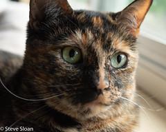 The Sloan Cats (Steve Sloan, San Jose, CA) Tags: 2019 201904 cats rainsloan