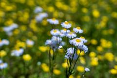 Flowers (J McCallister) Tags: flowers rossville tennessee unitedstatesofamerica