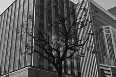 20190420_大阪_0166_sdQuattroH (mu_x2012) Tags: osaka japan sigma sd quattro h 35mm f14 dg hsm art