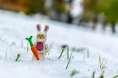 Easter bunny lost in winter (Ballou34) Tags: 2018 7dmark2 7dmarkii 7d2 7dii afol ballou34 canon canon7dmarkii canon7dii eos eos7dmarkii eos7d2 eos7dii flickr lego legographer legography minifigures photography stuckinplastic toy toyphotography toys washington districtdecolombie étatsunis 7d mark 2 ii eos7d stuck plastic district de colombie in snow winter easter bunny