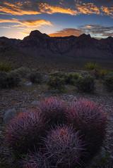 Red Barrel (Eddie 11uisma) Tags: red barrel cactus las vegas nevada rock canyon sunset