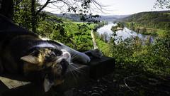 Bayern für die Katz: Naabtal (seyf\ART) Tags: tiere bayern cats