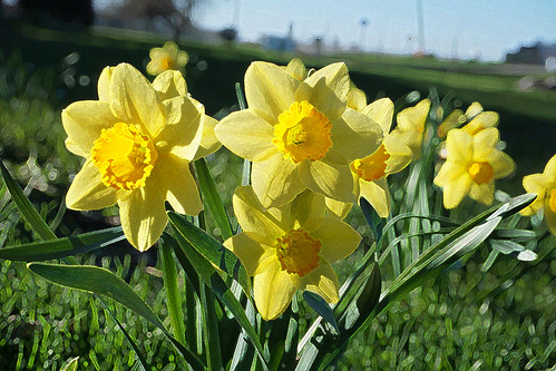 Yellow for Easter and Slider Sunday