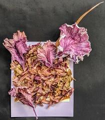 3Decomposition (Ray Liu Photography) Tags: roidweek decomposition art autumn leaves polaroid
