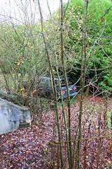Cachée (Raphael Drake) Tags: abandonne abandoned urbex rurex decay decayed epave voiture car wreck peugeot 405 break