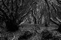 20190417a73_7409 (Gansan00) Tags: ilce7m3 α7ⅲ sony japan 大分 oita 日本 九重連峰 登山 landscape snaps ブラリ旅 04月 fe24105f4 trekking travelphotography 山