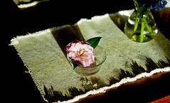 (bluebird87) Tags: kodak portra 160 film dx0 c41 epson v800 nikon f5 table pink flower lightroom