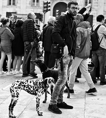 25 de Abril 2019 - Yes a lot of dogs also participate in the demonstration (pedrosimoes7) Tags: 25deabril 25deabril2019 revolution revoluçãodoscravos carnationrevolution demonstration democracy manifestação freedom liberdade celebration creativecommons cc blackandwhite blackwhite blackwhitepassionaward blackandwhiteonly fotoderua fotojornalismo fotoperiodismo fotopedia photojournalism streetpassionaward littledoglaughednoiret