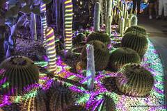 Electric Desert-Desert Botanical Garden-Phoenix (doveoggi) Tags: desert phoenix desertbotanicalgarden arizona 7378