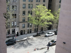 Easter Morning Green Spring Leaves on Tree 6653 (Brechtbug) Tags: easter morning green spring leaves tree 45th street between 8th 9th avenues looking out front window nyc 04212019 small shadow weather car parking lot hell s kitchen clinton new york city midtown manhattan 2019 leaf growing sunlight
