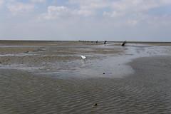 Cuxhaven (Michael Franze) Tags: 30mm sigma contemporary ilce6000 a6000 sony alphanatur landschaft watt möwe meer nordsee wasser