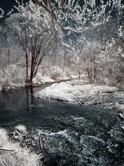 Springville Branch (Explore) (Mulewings~) Tags: infrared inf duckegg vernoncounty parks countypark troutstream canonelph notquiteblackandwhite hiking water stream trees nature explore
