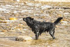 A la caza del palo 4 (lebeauserge.es) Tags: rascafría madrid españa naturaleza campo sierra agua río animal perro