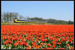NSR-4080+4024_Ssh_21042019 (Dennis Koster) Tags: ns nsr trein personentrein passagierstrein bollen tulpen icmm 4080 4024 warmond 1832lwgvc
