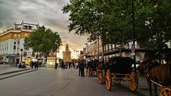 (igarzon) Tags: sevilla torredeloro caballos atardecer sunset andalucía españa spain seville horses