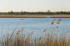 Naardermeer (sillie_R) Tags: lake landschap meer naardermeer nederland netherlands noordholland riet water naarden northholland