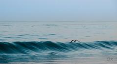 Sayulita (diegographyx) Tags: sayulita playa mexico nayarit beach colors colores background wallpaper sun golden hour pueblo magico birds sunset