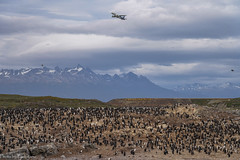 The sky over Beagle channel / Небо над проливом Бигль (Vladimir Zhdanov) Tags: travel argentina chile tierradelfuego ushuaia birds nature landscape aircraft airplane sky cloud mountains snow