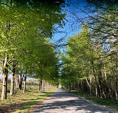 On the way home 111/365 (5/1572) (♔ Georgie R) Tags: road trees goodwood sussex