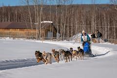 Sled Dog Race (alicecahill) Tags: alaska usa ©alicecahill sleddograce dog ak race person fairbanks snow