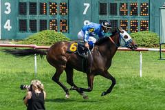 Salsa Dog (Baez, Jose) (avatarsound) Tags: boston suffolkdowns horse horseracing horses jockey jockeys race racetrack racing rider riding sport