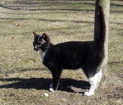 Feline44 (Feliform) Tags: cat cats tomcat stray homeless