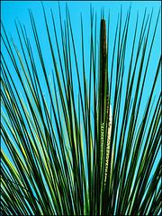 P4210069-B_fl - wieder (II) (gemischtersatz) Tags: botanischergarten landstrase wieniii wien vienna österreich austria at mirrorless mft olympus mzuiko olympusem10iii mzuiko45mmf18 cross