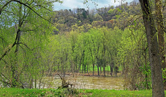 Riverine Forest (1) (Nicholas_T) Tags: pennsylvania columbiacounty southcentretownship columbiapark susquehannariver forest trees deciduous temperatedeciduousforest riparian palustrine palustrineforest spring nature creativecommons