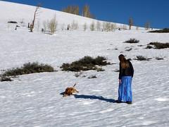 Snow dog (simonov) Tags: peavine mountain washoe county reno humboldttoiyabenationalforest camping snow spring bella dog hund chien 狗 σκύλοσ madra cane 犬 perro 개 سگ собака الكلب germansheprador ingrid woman peavinepeak