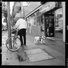 Stadt (tiltdesign2016) Tags: yashicamat124g analogphotography mittelformat bw ilfordfp4plus ilfordilfosol319 canoncanoscan9000f köln kalk stadt street strase hund