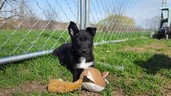 Bootsie Collins (DDA1) Tags: saveapetilorg shelter puppy adoption adoptionshelter adoptioncenter adoptable adopt