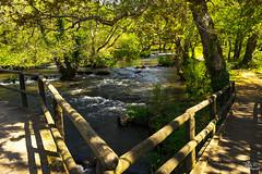 Sombras del río...!!! (Camelia-5) Tags: galicia coruña río agua árboles nutrias petirrojos