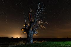 Cosquillas III (Yorch Seif) Tags: noche night nocturna nocturnal lightpainting longexposure largaexposicion estrellas stars d7500 tokina1116
