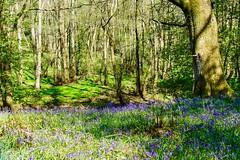 Bowdown Woods, Newbury