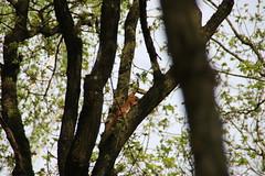 IMG_0387 (picolo_rasco@hotmail.com) Tags: nature fauna flora damme belgium