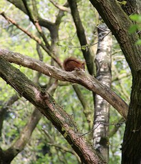 IMG_0380 (picolo_rasco@hotmail.com) Tags: nature fauna flora damme belgium