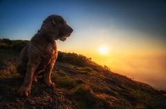 Fudge Sunrise (Anthony_Murray) Tags: fog bay sea morning sunrise ireland dublin cocker spaniel mountain