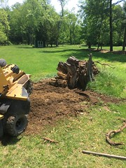 658C9A34-9071-4625-8F22-2F2AC43D5E36 (Lakeview Stump Grinding) Tags: lakeview columbia strongsville stump grinding ohio station north royalton cleveland berea olmsted falls landscaping bay village northeast service grind removal