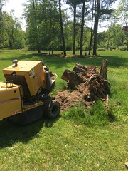 2B839B8F-4260-4300-BA16-544813E88EFE (Lakeview Stump Grinding) Tags: lakeview columbia strongsville stump grinding ohio station north royalton cleveland berea olmsted falls landscaping bay village northeast service grind removal